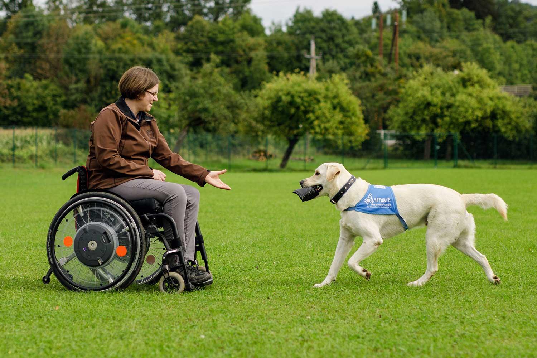 Partnervermittlung für hunde